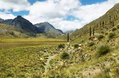Raimondi de Puya, Huascaran, Peru fotos de stock royalty free