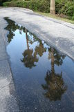 After The rain. Reflection of Palm Trees in a puddle of water Royalty Free Stock Image