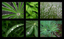 Rain. On a rainy day royalty free stock photography