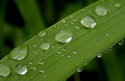 Rain. Drops on grass Royalty Free Stock Image