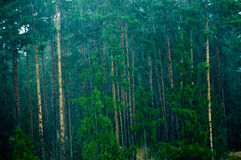Rain. It rains strongly. Some trees are to be seen Royalty Free Stock Images