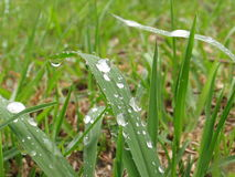 After the rain. Shot at grass in the garden of a church, after the rain stock image