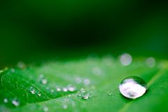 After the rain. Drops of water on a green leaf royalty free stock photography