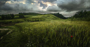 Before rain. Beautiful landscape with a single red flower on a background of grass and green mountains in Tuscany Royalty Free Stock Images