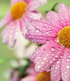 After the rain. Beautiful flowers after the rain Royalty Free Stock Photography