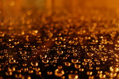 Rain. Water drops royalty free stock photo