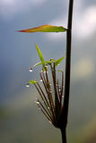 After the Rain Royalty Free Stock Photography