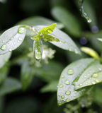 Rain. Drops on plants after summer rain Stock Photography