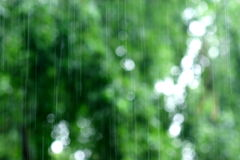 Rain. Heavy rain falling, green background royalty free stock photography
