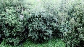Rain aerial view. Torrential rain in summer top view stock video footage