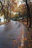 Rain asphalt road. Autumn rain of asphalt road surface features Stock Photos