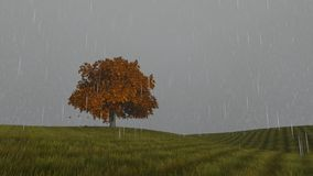 Rain Autumn one tree on the field falling leaves stock video