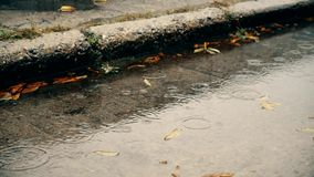Rain in autumn. Raindrops fall on a concrete pavement with water and fallen yellow and green leaves