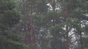 Rain on a background of trees stock footage