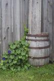 Rain barrel and plants Stock Image