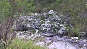 Rain in a basalt rock river bed in the dry temperate rainforest ecology of part of Northern NSW, Australia. This region of Australia, sustains an indigenous stock video footage