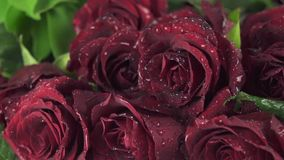 Rain on beautiful bouquet of red roses slow motion stock footage video. Rain on a beautiful bouquet of red roses slow motion stock footage video stock video