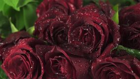 Rain on beautiful bouquet of red roses slow motion stock footage video. Rain on a beautiful bouquet of red roses slow motion stock footage video stock footage