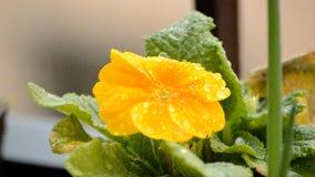 Rain And Beautiful Flower stock video footage