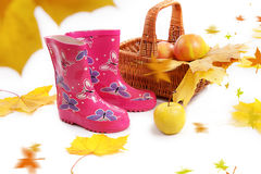 Rain boots, basket with apples and falling leaves Royalty Free Stock Photography