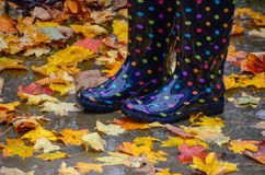 Rain boots with colorful autumn leaves. royalty free stock photos