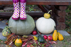 Rain boots and pumpkins Stock Images