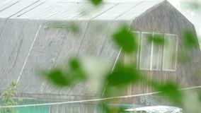 Rain. Branch of lilac in the rain. Rack focus stock video footage