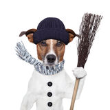 Rain broom dog. Rain broom winter dog hat stock image