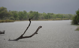 ...and the rain came down in Kruger Royalty Free Stock Image