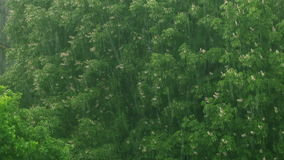 Rain in the city in spring. Rain with hail and lightning over the city in spring stock video