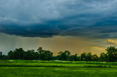 Rain cloud over forest Stock Images