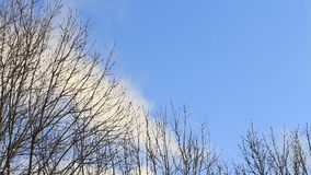 Rain clouds, blue sky, background, space, tree, winter stock footage