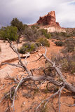Rain Clouds Gather Over Rock Formations Utah Juniper Trees. A vertical compostion of rock buttes before it rains in the Utah Wilds royalty free stock photos