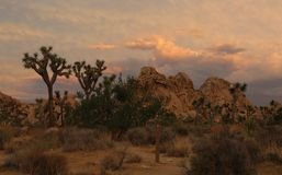 Rain Clouds Moving in at Joshua Tree National Park, California stock image