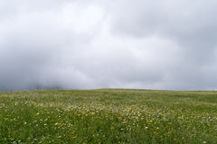 Rain clouds over field of flowers Stock Photo