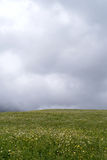 Rain clouds over field of flowers Royalty Free Stock Image