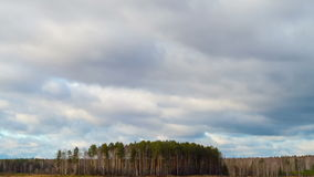 Rain clouds over a pine forest. Time Lapse Royalty Free Stock Image