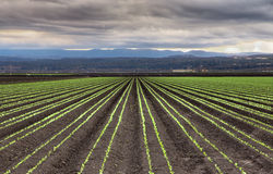 Rain Clouds Over Salinas Valley. Rain Clouds Forming Over Freshly Planted Lettuce Field in  Salinas Valley, California Royalty Free Stock Photography