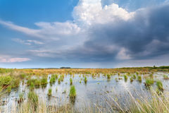 Rain clouds over swamp Stock Image
