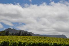 Clouds over the vineyards royalty free stock photo