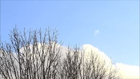 Rain clouds, sky, background, space, time lapse, tree, winter. Rain clouds in fast motion stock footage