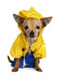 Rain coat Stock Image