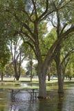 After Rain in Cortez Park, Phoenix, AZ Stock Image