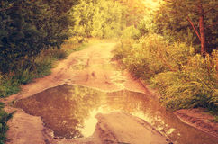 Rain covered path in sunny forest Royalty Free Stock Images