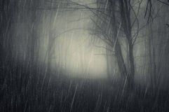 Rain in dark spooky forest. On Halloween stock photography