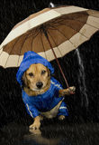 Rain dog Stock Photos