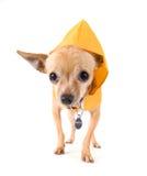 Rain dog Stock Images