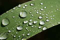 Rain dops on grass Royalty Free Stock Photos