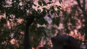 Rain dots on the green leaves dropped on young woman shaking theit branch at twilight time wit picturesque pink sky