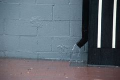Rain: downspout San Francisco Bay Area. Rain coming down a downspout duing a late May Storm in northern California royalty free stock photography